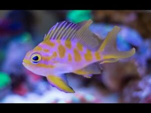 Saltwater Fish New Arrival!