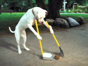 Doggy Dew Removal