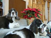 WINTER PET & HOUSE SITTING - Caring, Reliable, Experienced