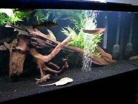 Aquarium Driftwood.