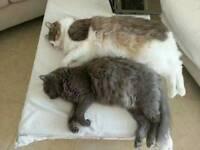 REWARD FOR MISSING CAT, COBDEN ST AREA