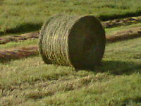 800 lb round bales suitable for Cattle, sheep, Goats Llamas