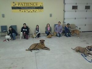 PUPPY AND BASIC OBEDIENCE CLASSES