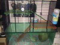 2 beautiful male gerbils for sale