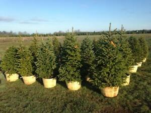 Beautiful potted trees