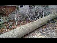 TREE REMOVAL, STUMP GRINDING  (30%off)