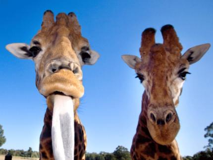 Taronga Zoo Ticket Pass Convenient Pickup