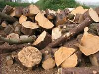 looking to buy your trees hardwood Free tree Drop Off or Pickup