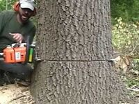 Affordable Tree Topping and Tree Removal Services