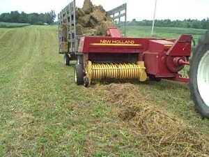 standing hay
