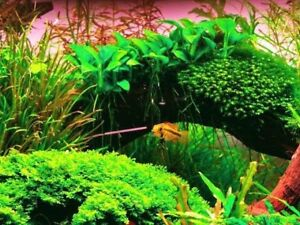 Looking Live aquarium plants