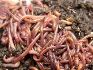 WORMS WORMS WORMS