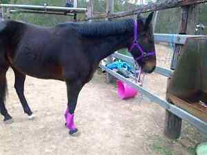 Horse gear for sale Kenmore Hills Brisbane North West Preview