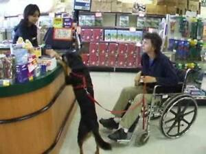 Start your service dog candidate out right!