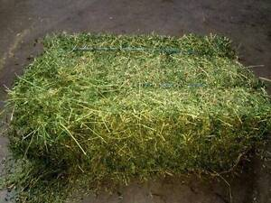 PURE CLOVER HAY FOR SALE Tullamarine Hume Area Preview