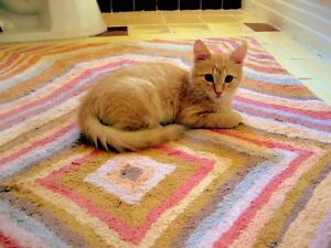 Beautiful home trained Bengal Kittens