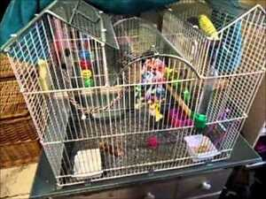 F/S Parakeet with large cage