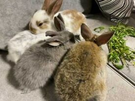 5 Adorable Bunnies for Sale