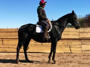 Competition mare in foal to Gullivers Travels