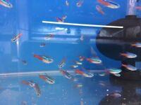 Tropical Fish job lot for sale