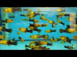 Tropical fish for sale.