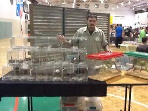 Reptile expo display cages Mount Pritchard Fairfield Area Preview