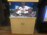 Aqua reef 300 marine tank with corals and live rock