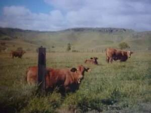 80 ACRES CATTLE PROPERTY MULGOWIE Blenheim Lockyer Valley Preview