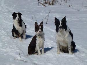 Gardienne pour chiens et chats à domicile pour Arvida (Urgent)