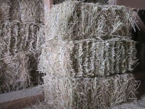 Small Squares of First Cut Timothy Alfalfa Hay