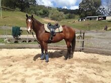2 TB geldings free to good home! Tallebudgera Gold Coast South Preview