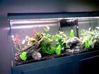 ''Looking For Free Aquariums An Setup''