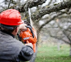 Hedge Trimming Tree Branch Pruning Stump Grinding Lawn Care