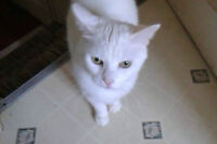 Rescued & Rehomed Cats at Kittenaide