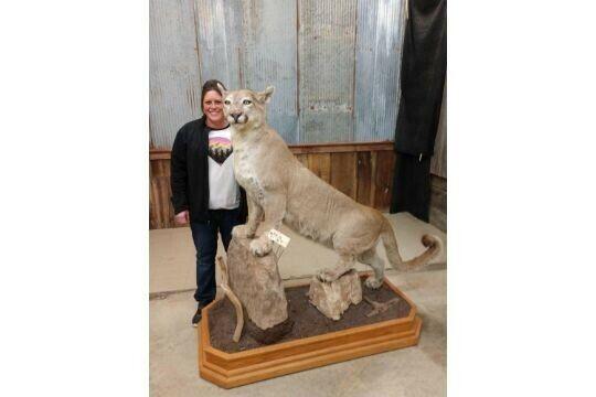 Beautiful  mount puma