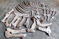 Squelette de vache