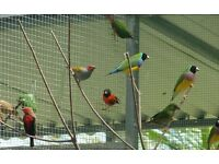 Small garden space wanted for keeping bird aviary.