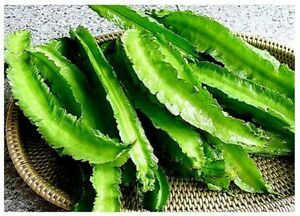 Green-Winged-bean-10-seeds-Giant-Goa-bean-Princess-bean-vegetable