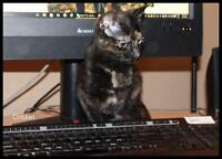 """Young Female Cat - Domestic Short Hair: """"cricket"""""""