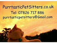 Need a Pet Sitter, Pet Sitting, Dog Walker or Dog Walking? Reliable, insured & police checked