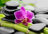 Nutrition / Feng Shui Services