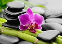 Feng Shui and Nutrition Services
