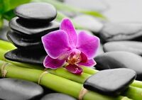 Nutrition & Feng Shui - 1 Free Question