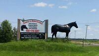 Pension cheval Terrebonne