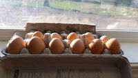 FARM FRESH EGGS BROWN FREE RANGE