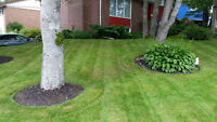 Profesional Quality lawncare *Rates from $25-$60* 902 580 0272