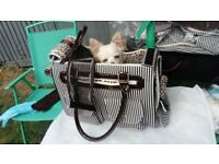 Designer Dog handbag pet carrier