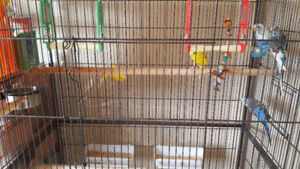 Parakeets with cage, accessories and food
