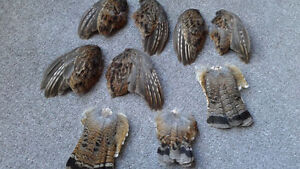 3 Sets Of Matching Ruffed Grouse Wings Plus 3 Tails