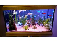 60 liter fish tank for sale